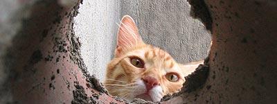 Curiosidad del gato Froilán