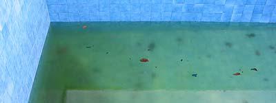 Agua azul o verde